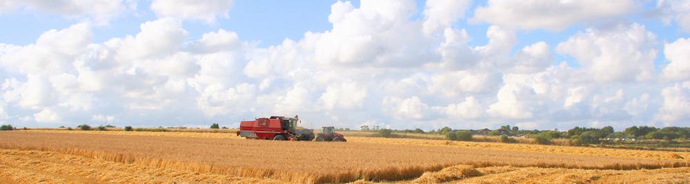 Header-harvest-2013.jpg