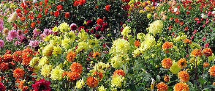 Event - Dahlia Garden Centre
