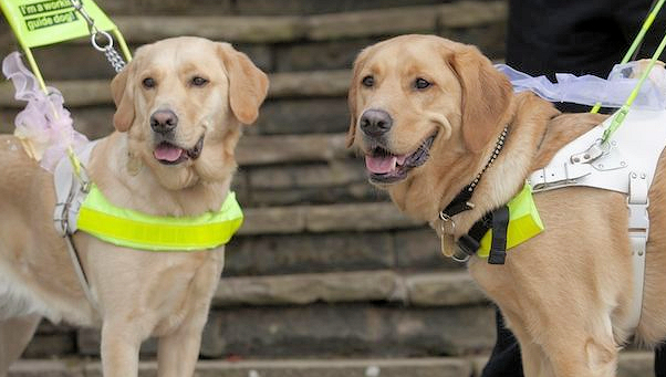 Event - Guide Dogs for the blind